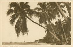 COCONUT PALMS, NASSAU