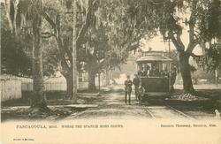 PASCAGOULA, MISS. WHERE THE SPANISH MOSS GROWS tram