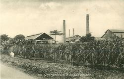 A SUGAR ESTATE