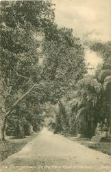 ON THE MAIN ROAD OF BOTANIC GARDENS
