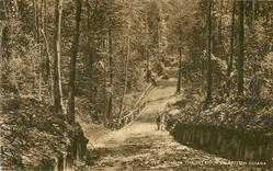 ROAD IN THE INTERIOR OF BRITISH GUIANA