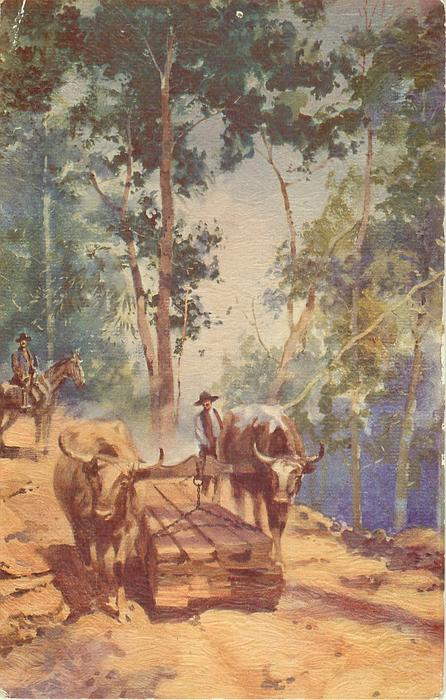 TRANSPORTING LUMBER IN THE FORESTS OF SOUTHERN CHILE