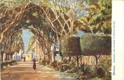 GARDENS AND AVENUE OF ROYAL PALMS