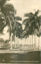 ROYAL PALM AVENUE, SHETTLEWOOD, HANOVER