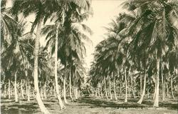 COCONUT WALK, GIBRALTAR, ST. MARY