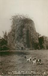 RUINS OF OLD WIND MILL, FAIR PROSPECT, PORTLAND