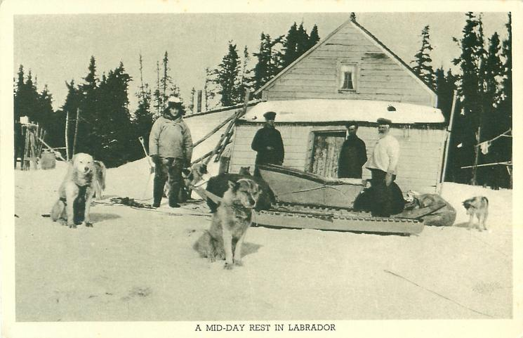 A MID DAY REST IN LABRADOR