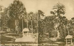 HISTORIC TALIPOT PALM, BOTANIC GARDENS