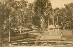 BOTANIC GARDENS SHOWING TALIPOT PALM