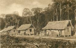 A ROAD THROUGH THE MORA FOREST, TRINIDAD