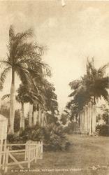 PALM AVENUE, BOTANIC GARDENS, TOBAGO