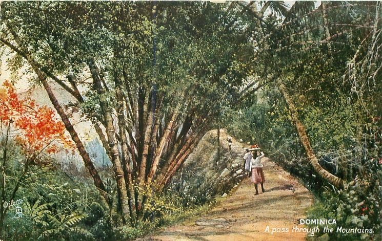 DOMINICA, A PASS THROUGH THE MOUNTAINS