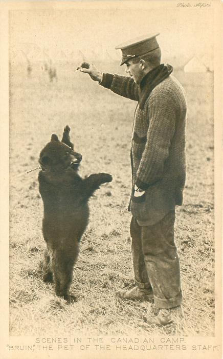 """SCENES IN THE CANADIAN CAMP,  """"BRUIN"""", THE PET OF THE HEADQUARTERS STAFF"""