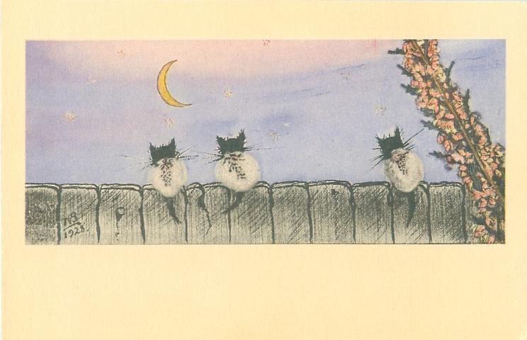 """WILLOW """"CATKINS.""""  LATE FEBRUARY IN YUKON, HEATHER, CAULFIELDS, BRITISH COLUMBIA"""