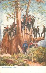 A MONSTER TREE STUMP