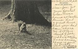 THE SQUIRREL, ONE OF ANNE ARBOR'S PETS