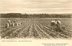 FORT FAIRFIELD, ME., A 50 ACRE POTATO FIELD