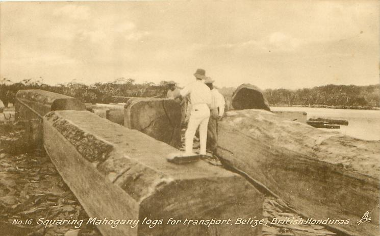 SQUARING MAHOGANY LOGS FOR TRANSPORT, BELIZE