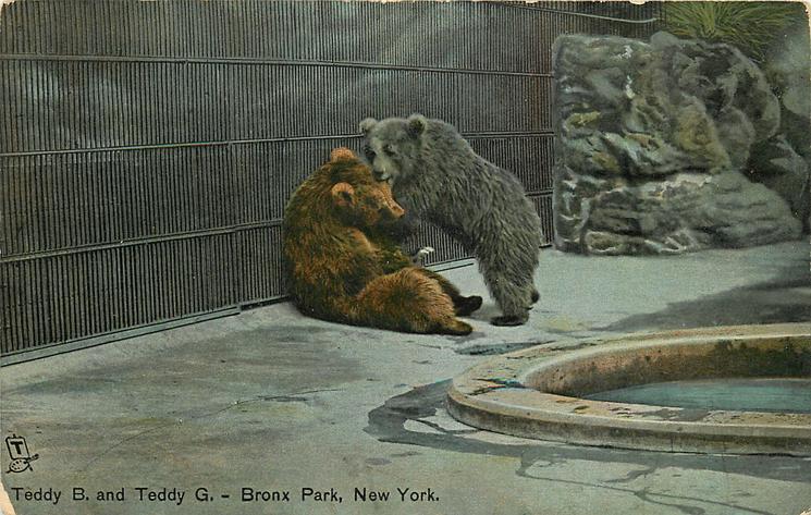 TEDDY B. AND TEDDY G.  bears