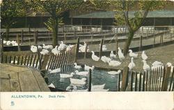 DUCK FARM  pond centre front
