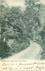 SHELL ROAD IN THE WOODS