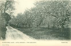 "APPLE ORCHARD - ""THE OAKLANDS"""