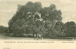 LIVE OAK, WITH MOSS FROM WHICH MATTRESSES ARE MADE