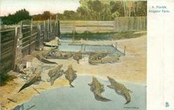 A FLORIDA  ALLIGATOR FARM