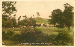 A GLIMPSE OF THE FOREST NEAR BLASHFORD