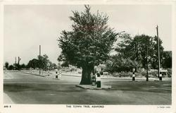 THE TOWN TREE
