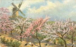 windmill left above blossom trees, four chickens below