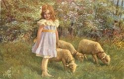 girl in violet dress stands left of 3 lambs, holds their leash in her hand