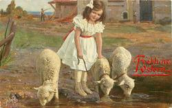 girl in white dress, red belt, stands between three lambs whilst they drink