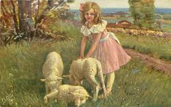 girl in pink dress stands right of three lambs with both hands on the back of a lamb