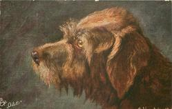 ROUGH-HAIRED TERRIER