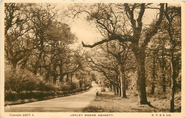 LOXLEY WOODS