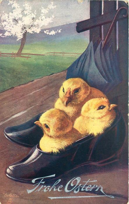 three chicks in shoe