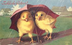 two chicks under umbrella