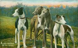 GREYHOUNDS,  ON THE ALERT