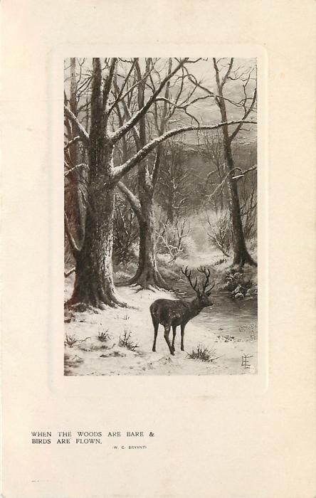 WHEN THE WOODS ARE BARE & BIRDS ARE FLOWN  elk stands by snowy woodland path