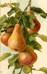 four pears hang down