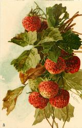 seven strawberries