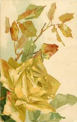 large yellow rose open lower left, one bud above it, leaves above the bud
