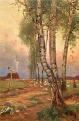 line of birches leading down to cottage with smoking chimney