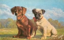 two dogs on grass, brown dachshund to left, cream coloured dog with black face to right