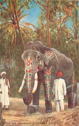 H.H. THE MAHARAJAH OF MYSORE'S ELEPHANT