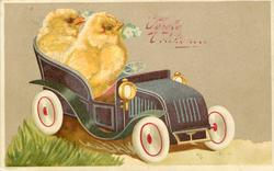 easter, two chicks sit in toy car, each with primrose in bill