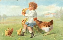boy sits on basket holding chick up to food in his mouth, other chicks , anxious hen observes