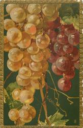 white & pale purple grapes