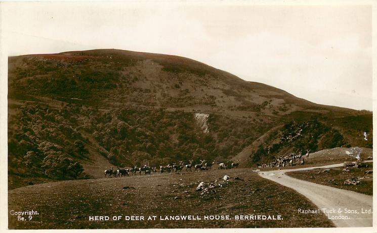 HERD OF DEER AT LANGWELL HOUSE (RESIDENCE OF THE DUKE OF PORTLAND)